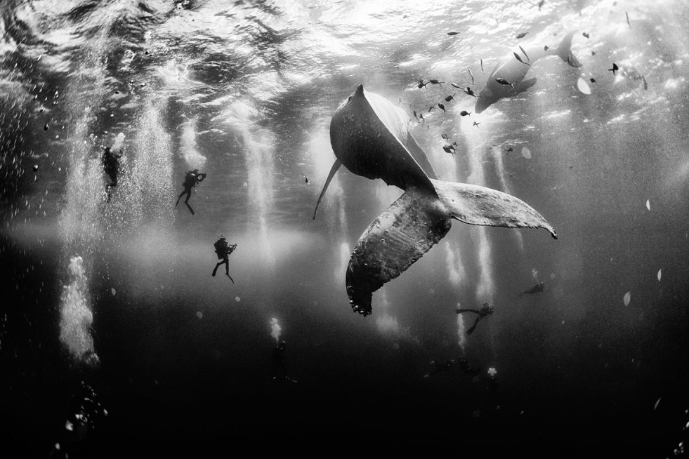 Grand Prize_Whale Whisperers